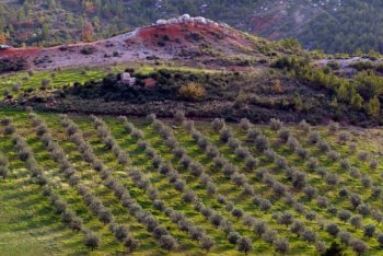 terre de mistral olive grove