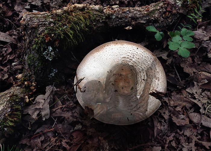 Mushroom Madonna