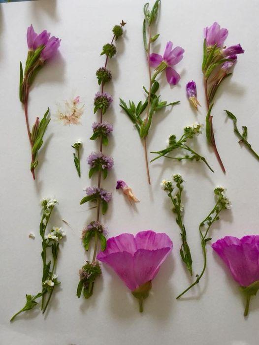 Flower Press Creations
