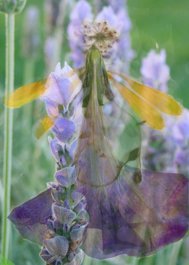 Lavender's Peace